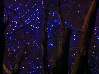 Starry Night - Kit Mitchell