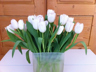 whitetulips