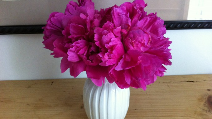 Permanent Link to Peonies make me happy today