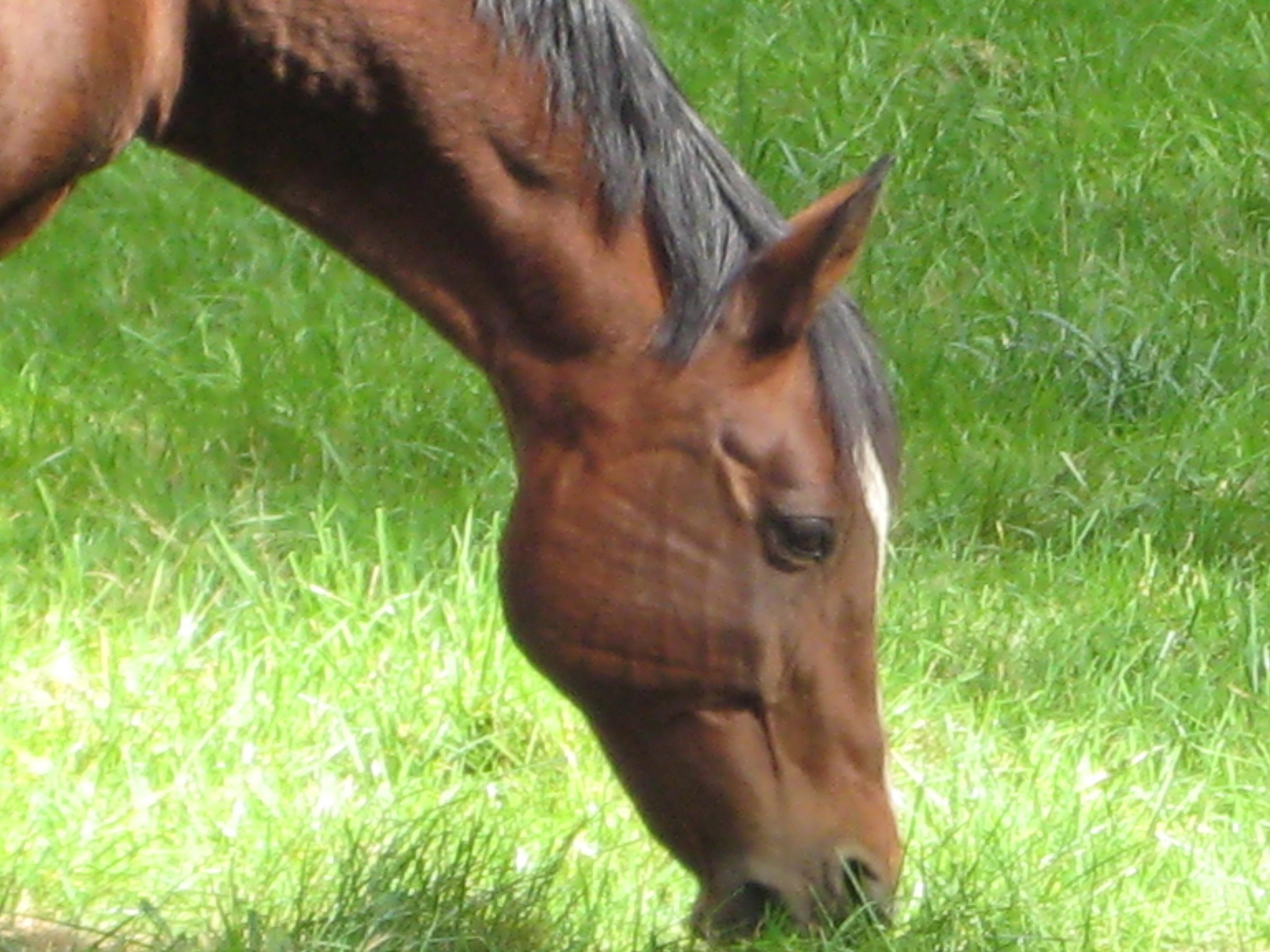 Equine Calm